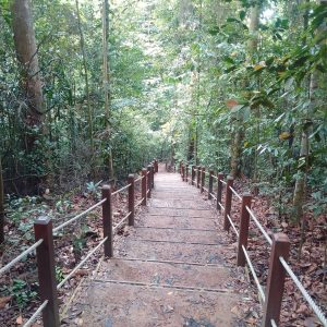 Bukit Timah Black Diamond Trail