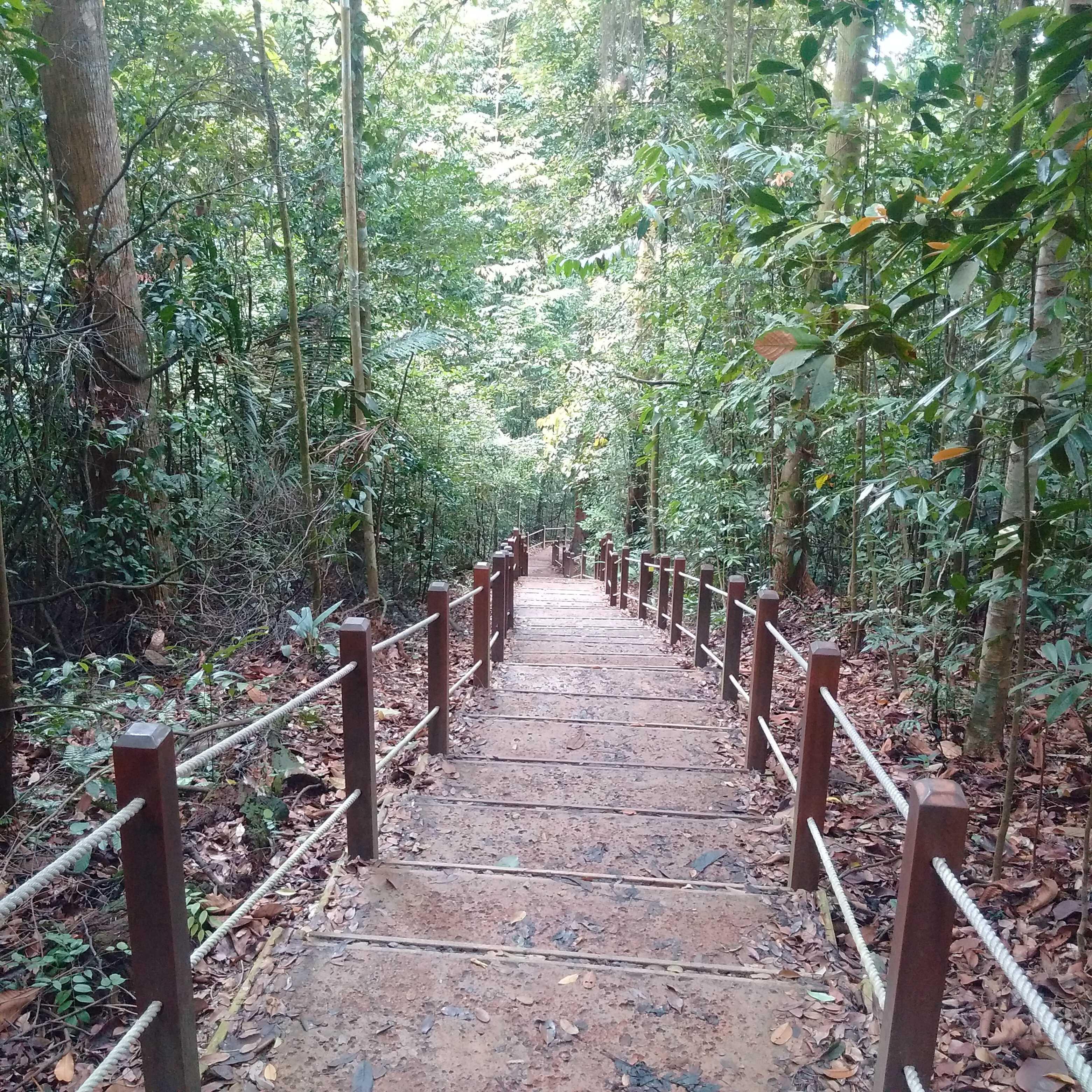 Bukit Timah Black Diamond Trail