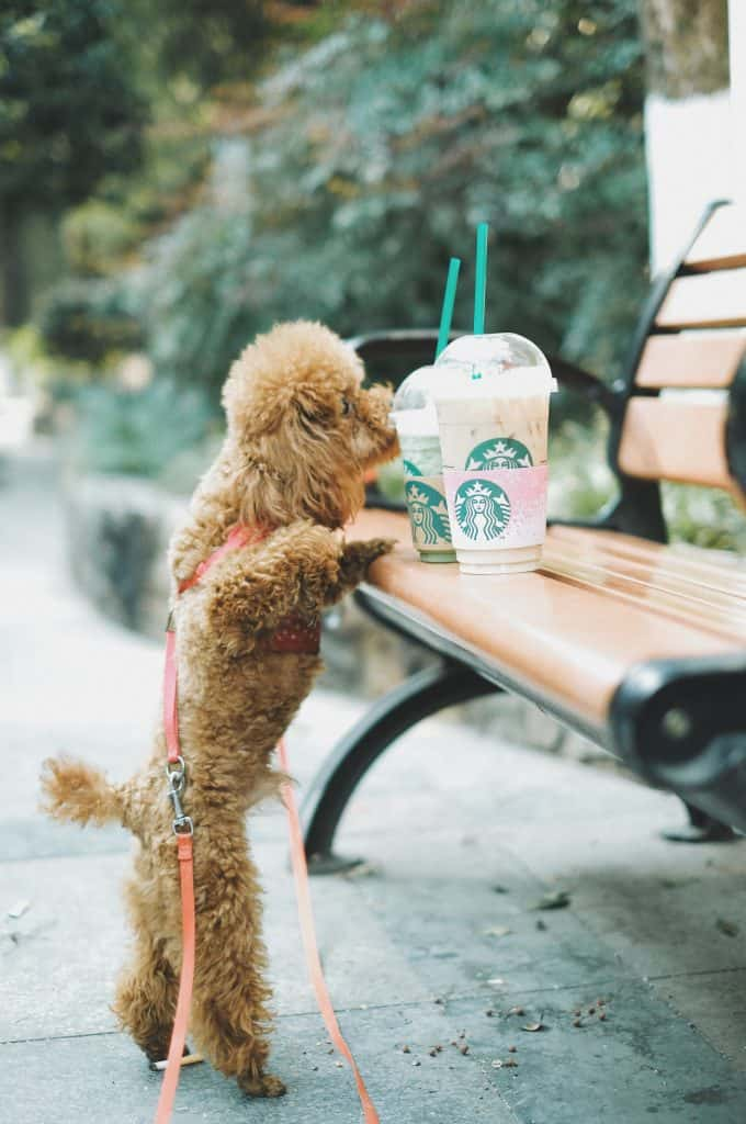 COFFEE WITH PUPS